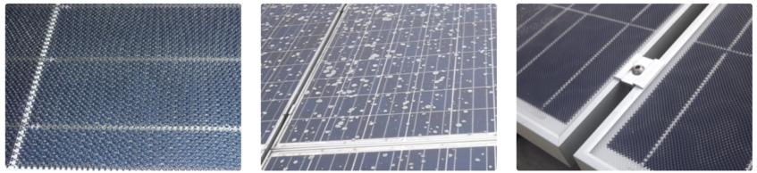panneaux solaires photovoltaïques micro-structurés avec lichens (champignons)