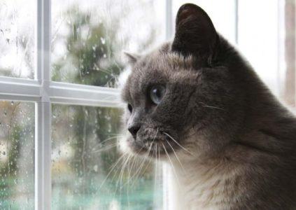 Trace animaux fenêtre